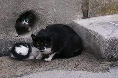cats-e1454873768406