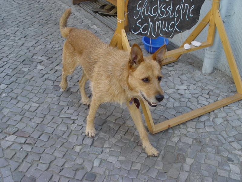 06_wachhund