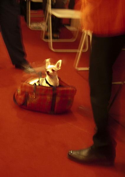 08_taschenhund